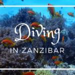 【ザンジバル】アフリカの海で初ダイビング!してきました!!