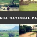 タンザニア最大!なのに旅行客に知られていない穴場サファリ…ルアハ国立公園